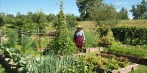 Женщина ушла за укропом в огород и… пропала