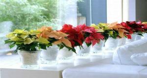 Способ, с помощью которого цветы в вашем доме будут цвести долго и пышно