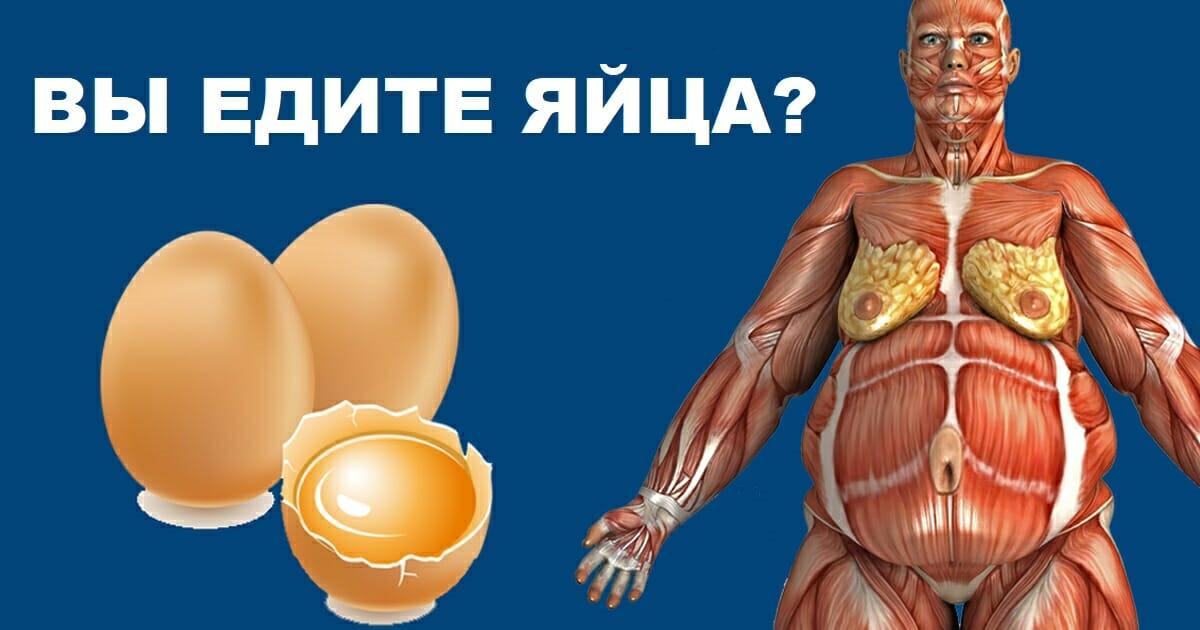 Исследования показали, что будет с вашим телом, если съедать по 2 яйца в день