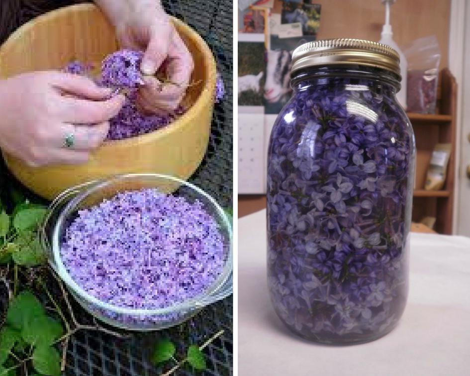 Пока цветет сирень, заполните банку растительным маслом и фиолетовыми цветками.